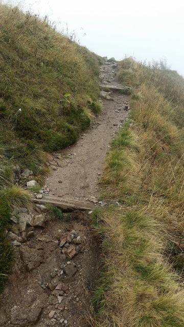 vogesen_august18_66_kurz_vor_hohneck_trail